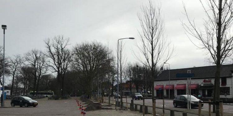 Nieuwe bomen geplant in binnenstad