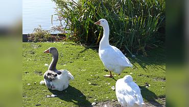 Nestbehandeling ganzen – Nieuws – Home –