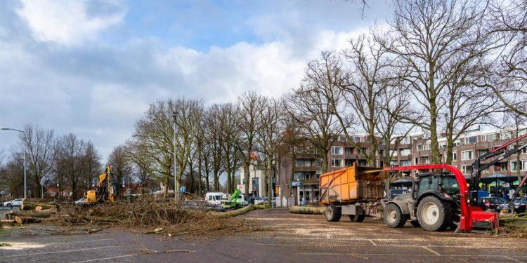 Oude populieren in voorjaar vervangen door nieuwe bomen