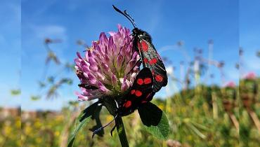 Je eigen tuin of bloemenweide op gemeentegrond – Nieuws