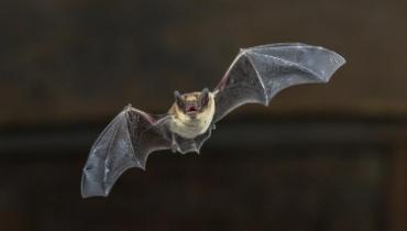 Antennes op het duin voor vleermuizenonderzoek – Nieuws