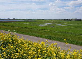 Provincie komt boeren Waterland-Oost tegemoet