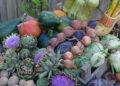 Boer & Business in Balans; Zet duurzaam voedselproject op de kaart